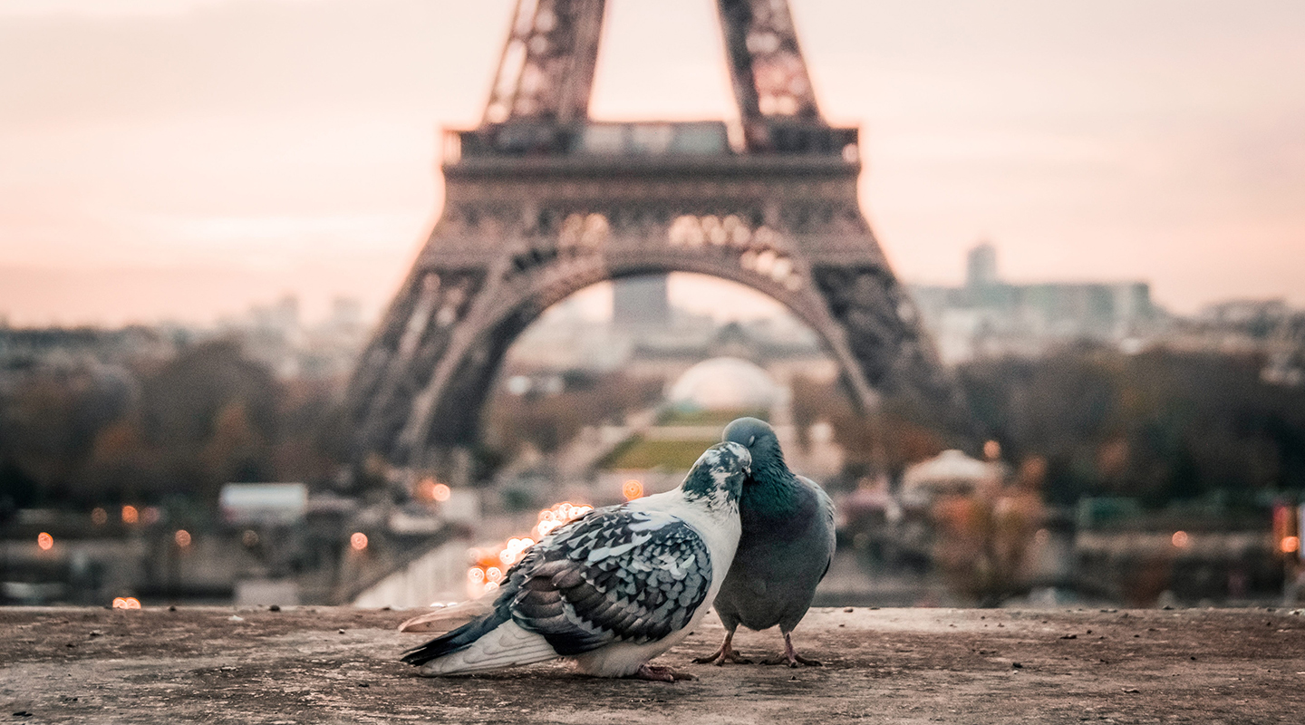 two pigeons in front of the effiel tower
